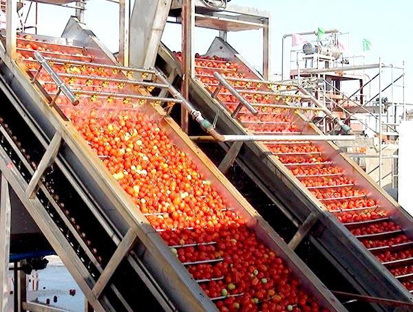 果蔬生产线