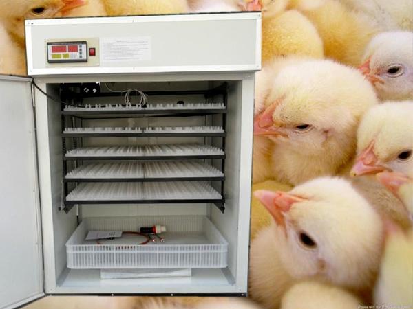 小型孵化机价格