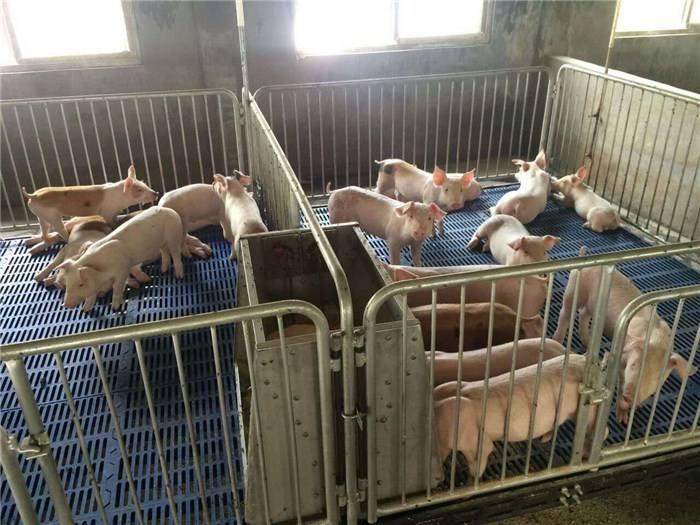 泊头母猪产床厂家