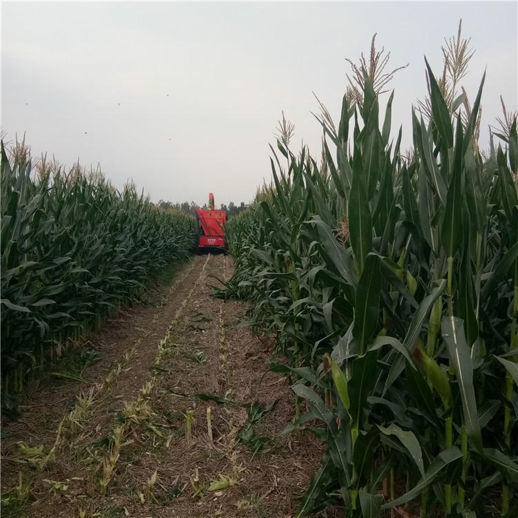 玉米青贮收获机